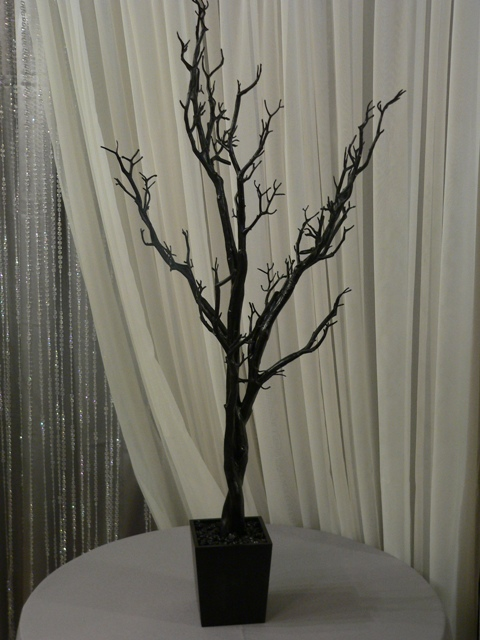 4 Ft Black Manzanita Tree