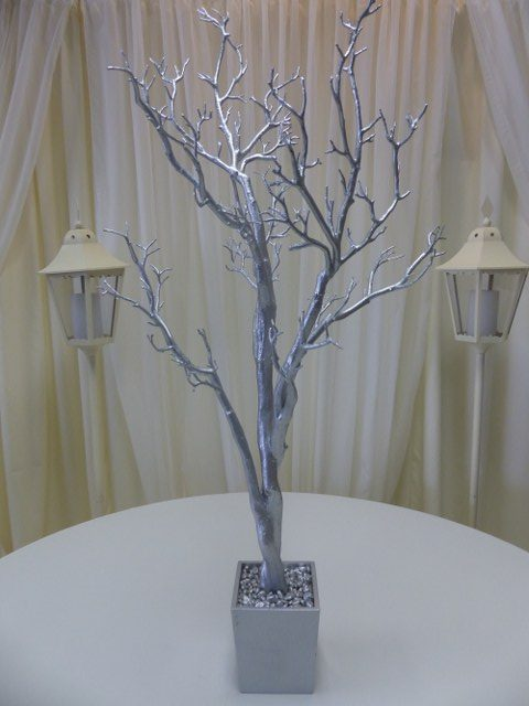 4Ft Silver Manzanita Tree