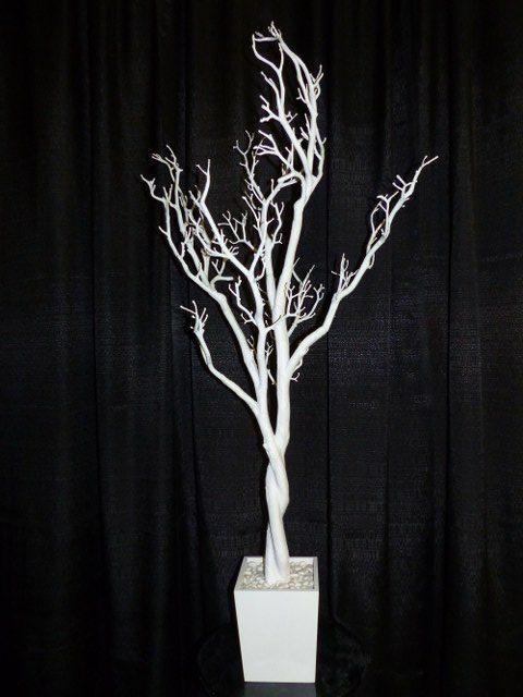 4Ft White Manzanita Tree