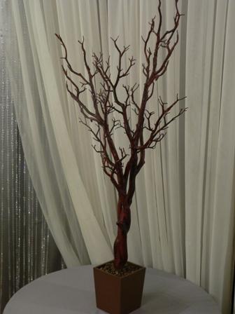 4Ft_Brown_Manzanati_Tree
