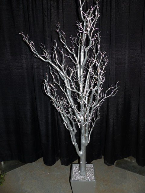 6Ft Silver Manzanita Tree