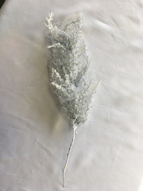 Iced Atlantic Pine Spray_640x480