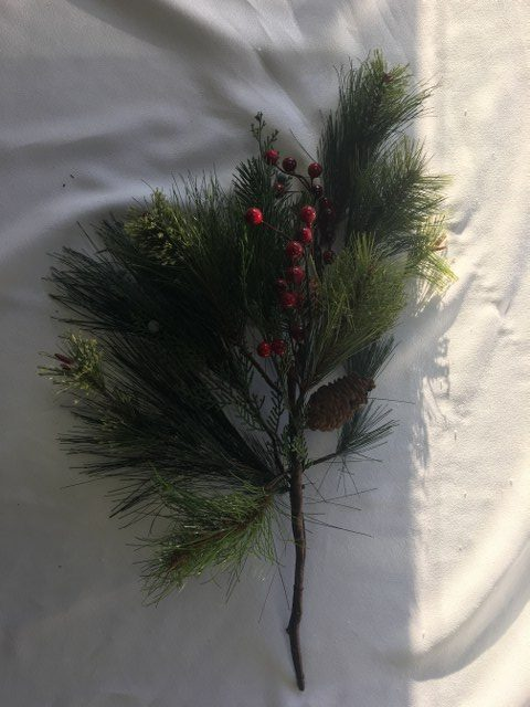 Pine Branch w Cone & Red Berries_640x480