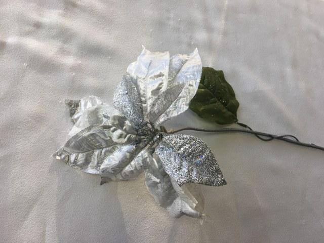 Silver Poinsettia_640x480