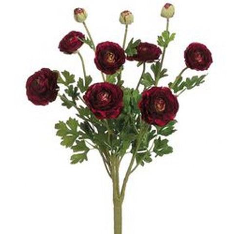 Burgundy Ranunculus_480x480