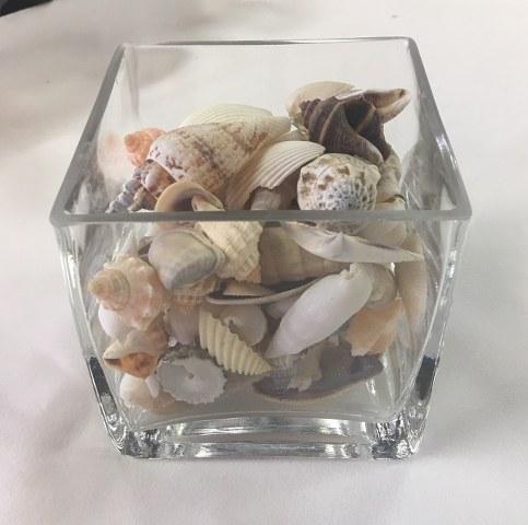 Mini Mixed Seashells_483x480