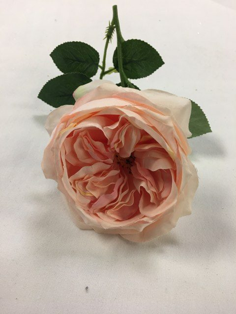 Cabbage Rose, Artificial, Blush_640x480