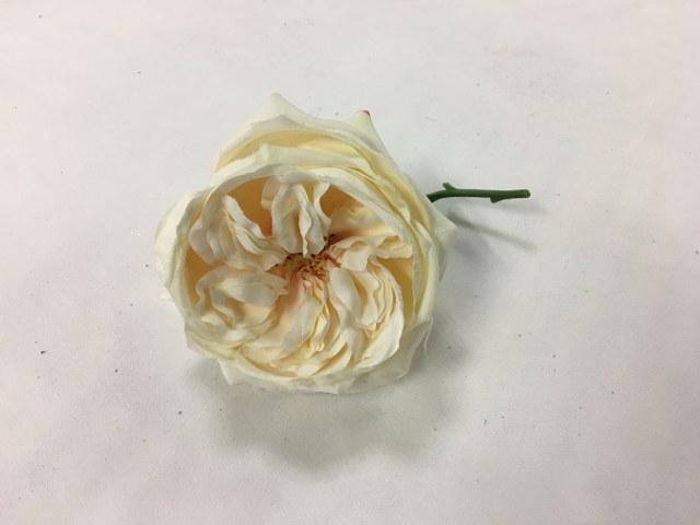 Cabbage Rose, Artificial, Cream_640x480