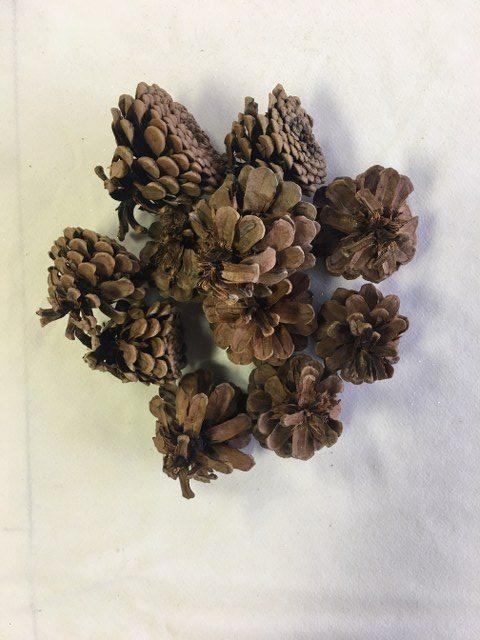 Cinnamon Scented Pinecones_640x480