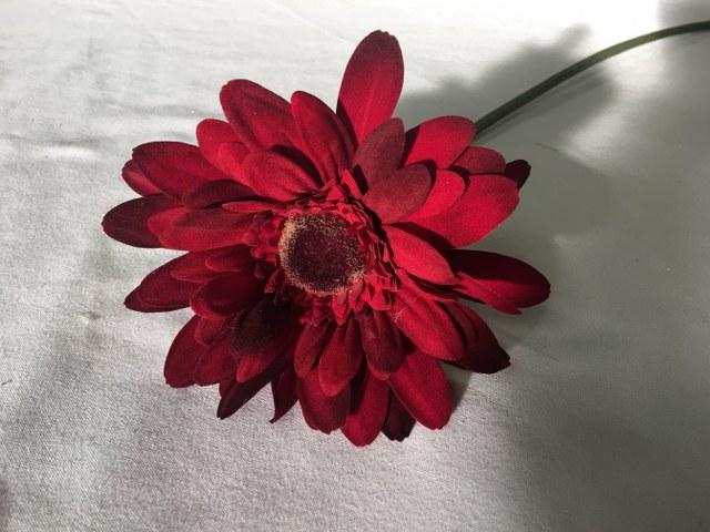 Gerber Daisy, Dark Red, Artificial Long Stem_640x480