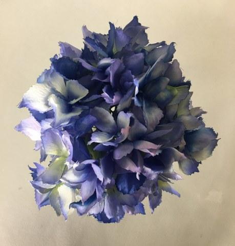 Hydrangea Stem – Blue – Artificial_459x480