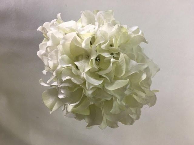 Hydrangea Stem – Cream – Artificial_640x480